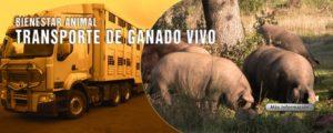 Autoescuela-ganado-vivo